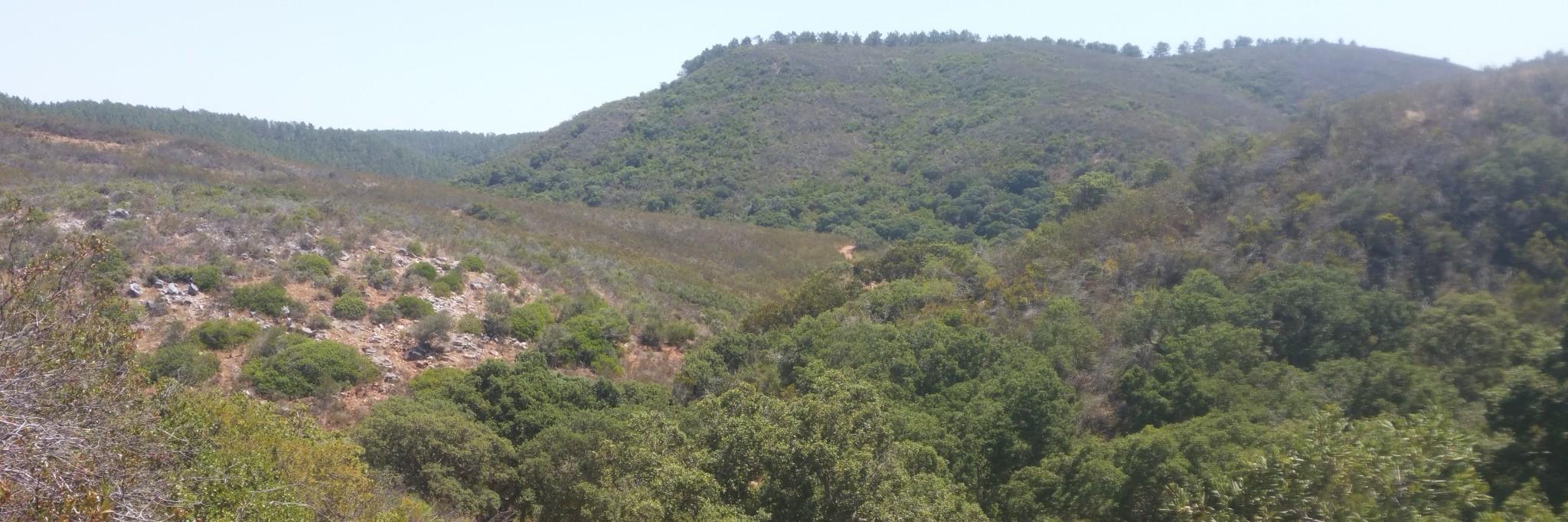 Entre Arrifana et Carapateira