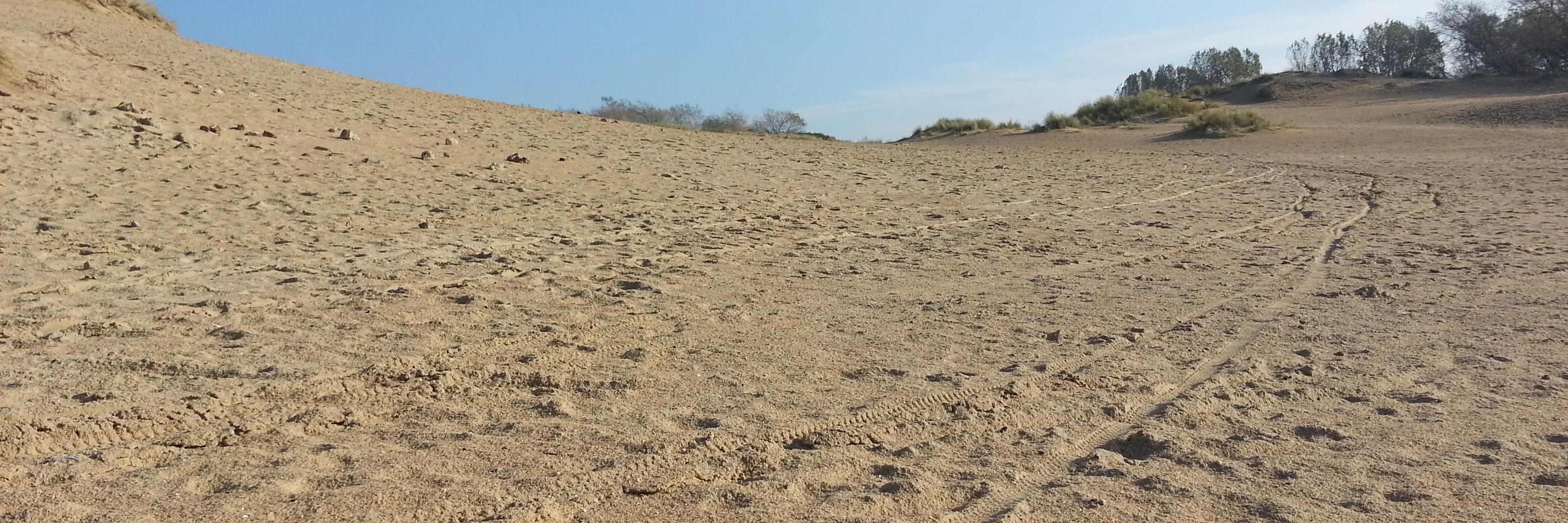 100-dune-infinie