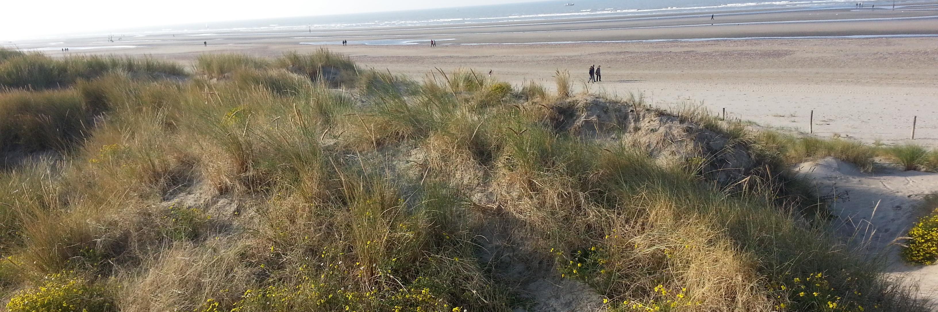 120-dune-sauvage