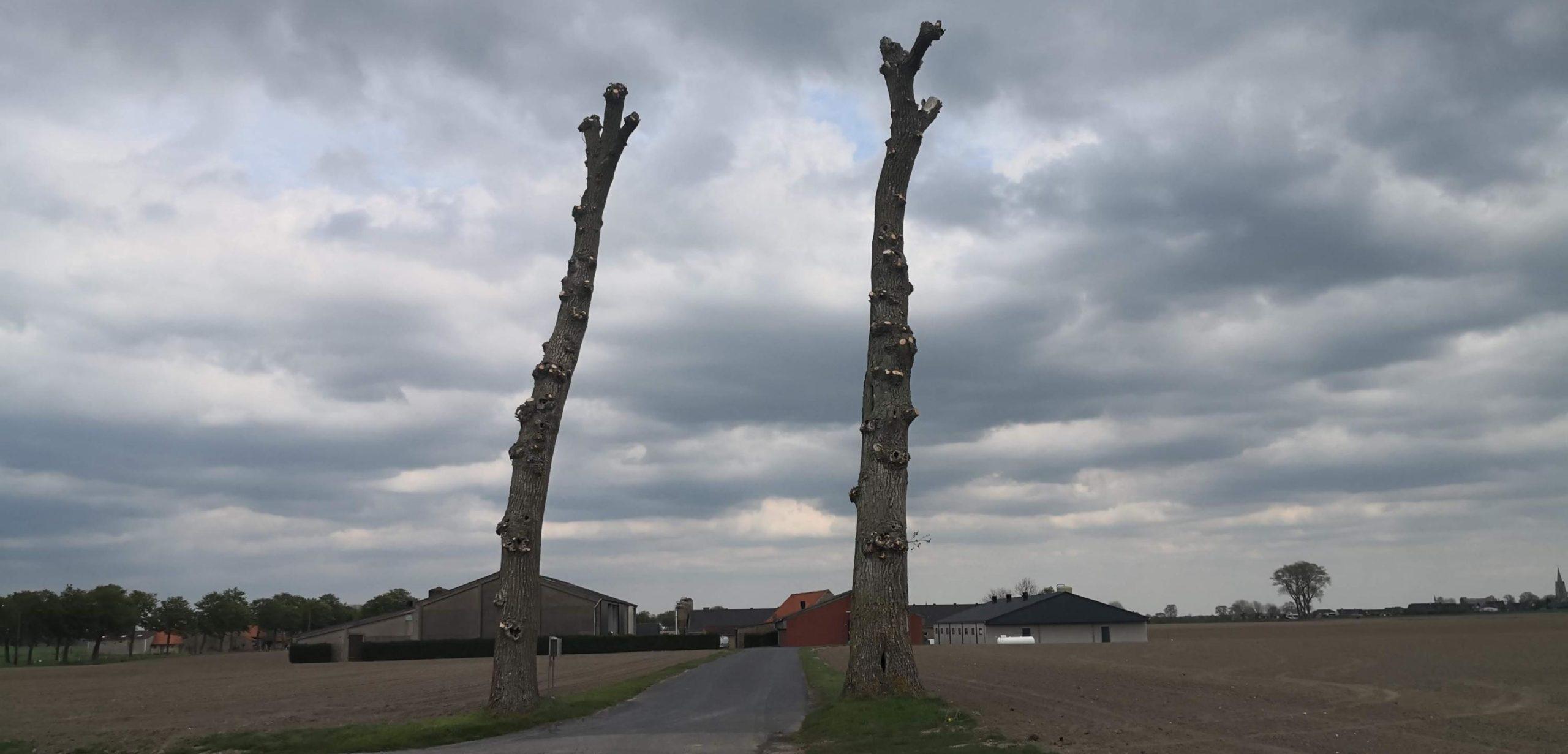 Pollinkhove arbres sinistres