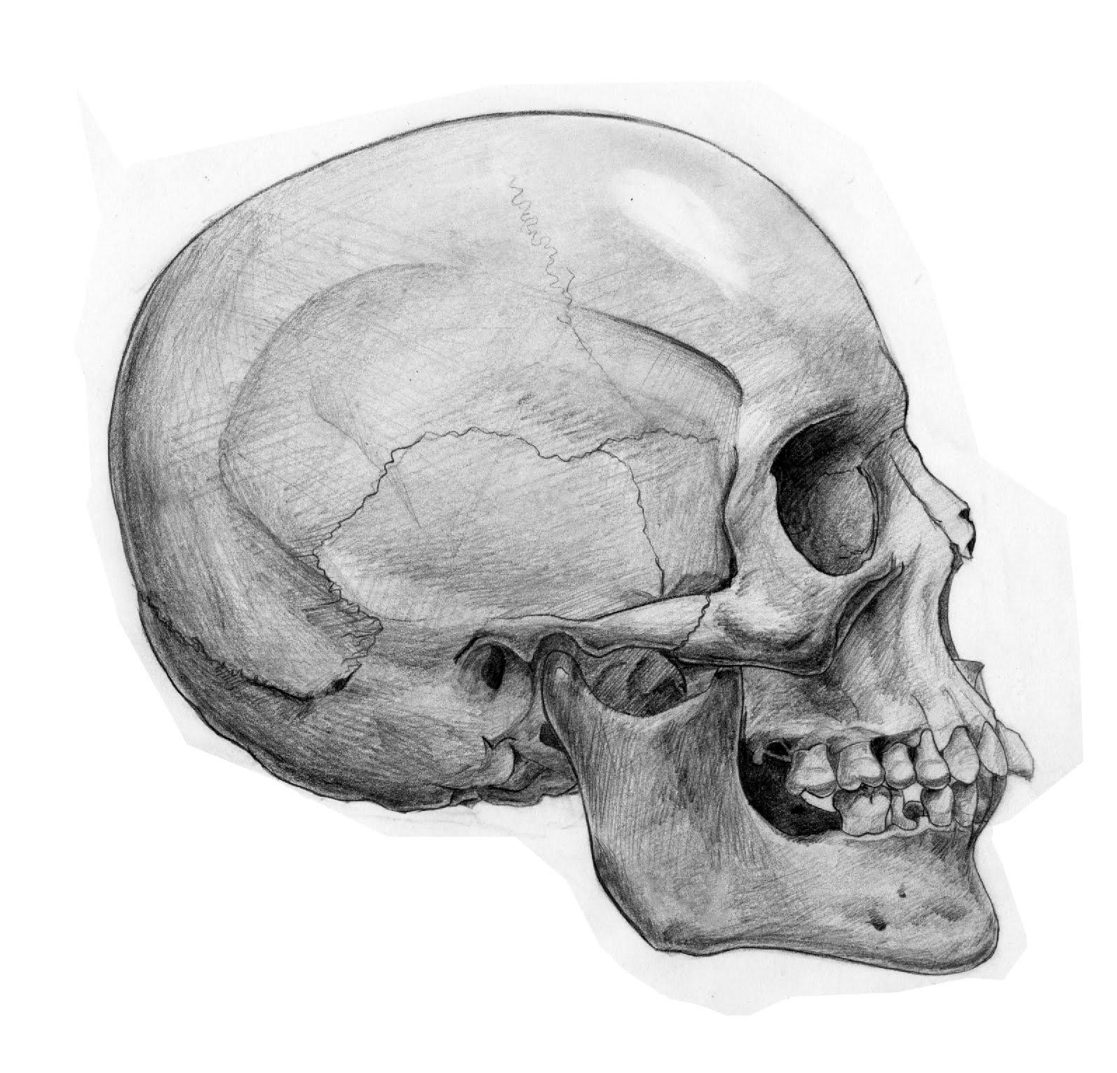 Les dangers du régime paléo : l'argument de la mauvaise santé des hommes préhistoriques